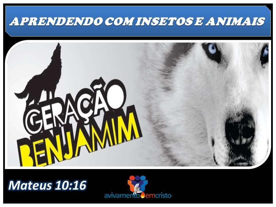 APRENDENDO COM INSETOS E ANIMAIS